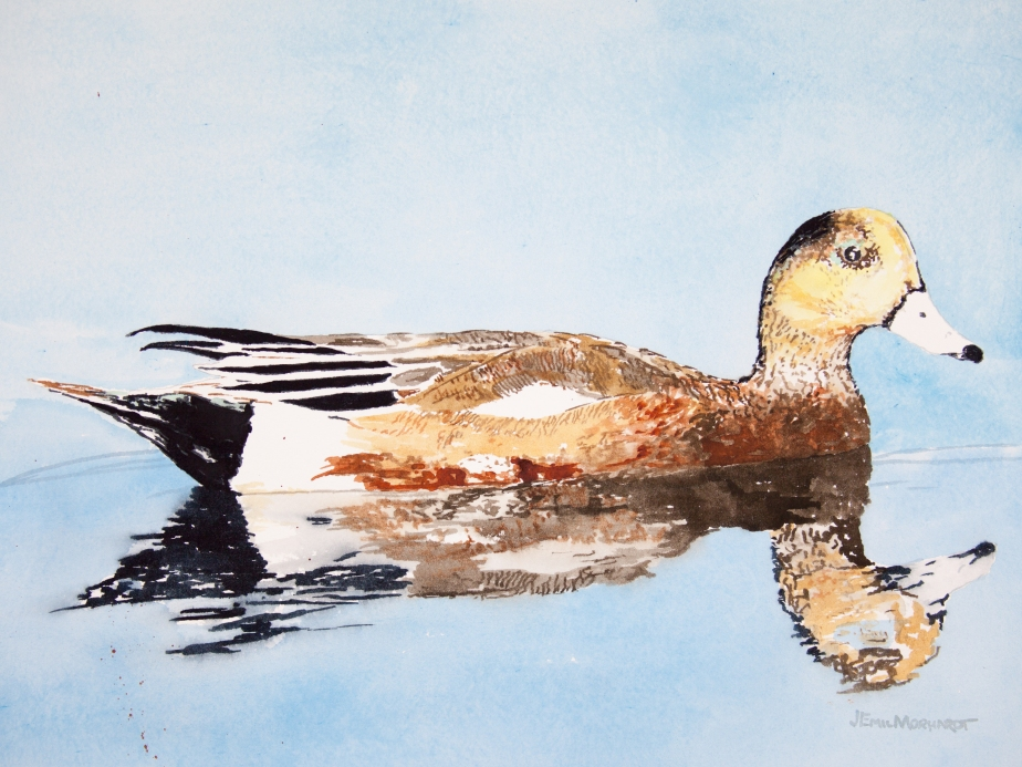 "American ""Storm"" wigeon: 11"" x 13"" watercolor on Arches 140 lb. cold pressed paper"