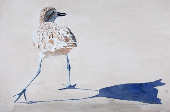"Black bellied plover #5: 15"" x 22"" watercolor on Arches 140 lb. cold pressed paper"