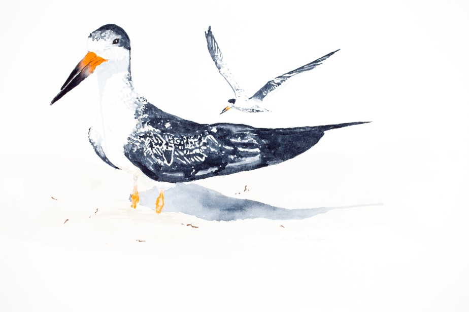"Black skimmers : 16"" x 20"" watercolor on Arches 140 lb. cold pressed paper"