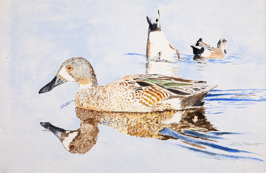 """Blue-Winged Teal #1, UCSB Lagoon. 15"""" x 23"""" watercolor on Arches 300lb hot-pressed paper."""