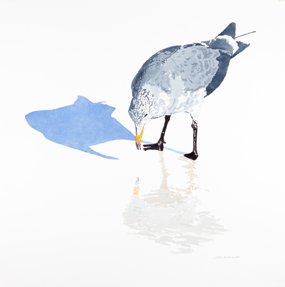 "Heerman's gull #1: 22"" x 22"" watercolor on Arches 140 lb. cold pressed paper"