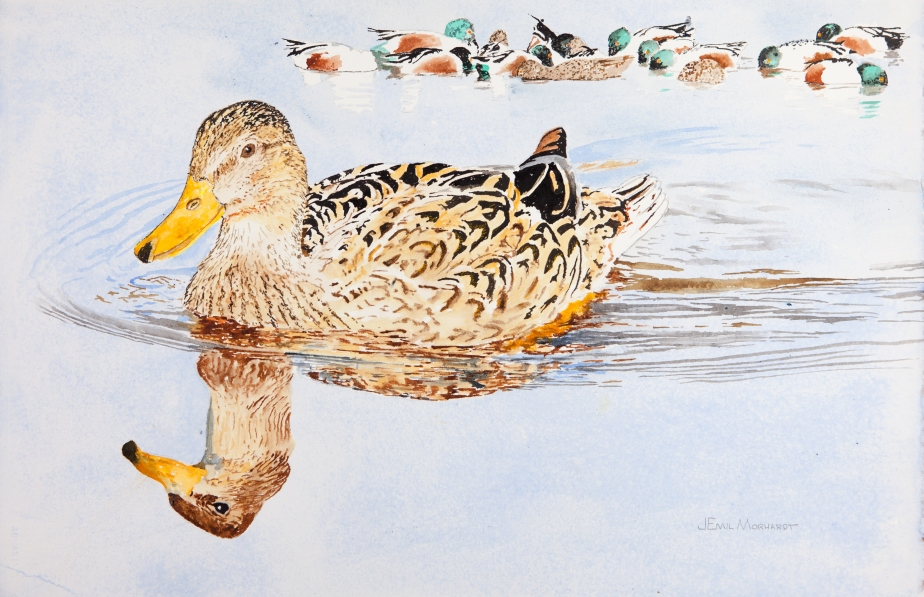 "Mallards #1, 15"" x 23"" watercolor on Arches 300 lb. hot-pressed paper"