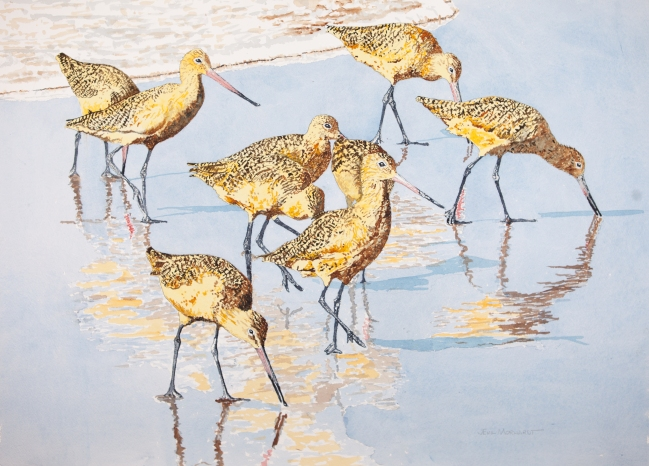 "Marbled godwits #21 22"" x 30"" watercolor on Arches 300 lb. cold-pressed paper, SOLD"