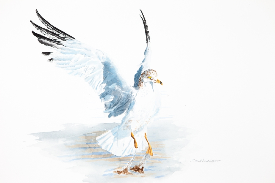 "Mew gull leaping: 16"" x 20"" watercolor on Arches 140 lb. cold pressed paper"