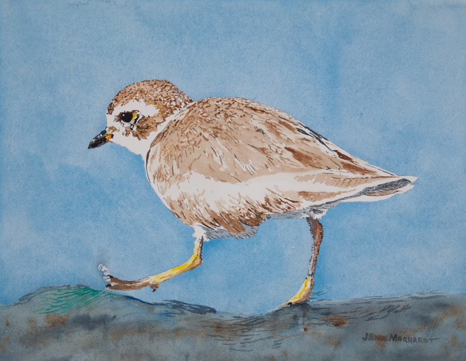 Semipalmated plover at Coal Oil Point