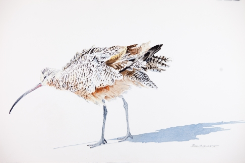 """Whimbrel #8, Watercolor on 15"""" x 22"""" Arches 300lb hot-pressed paper, $500"""