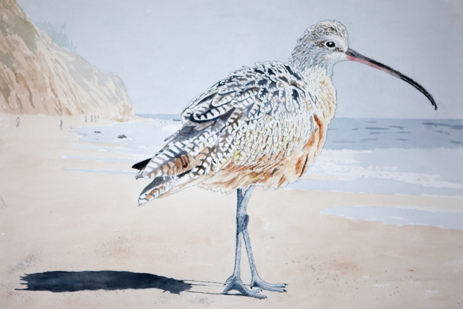 "Whimbrel #9, 16"" x 20"" watercolor, $500"