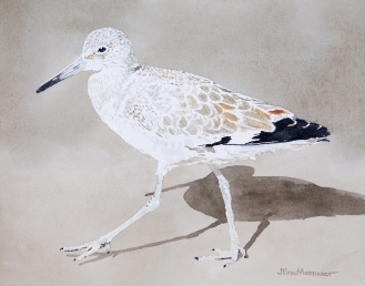 "Willet #7 11"" x 13"" watercolor on Arches 140 lb. cold pressed paper"