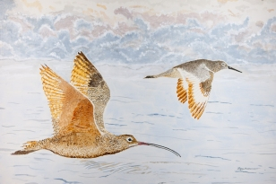 "Long-Billed Curlew and Willet Flying, 24"" x 36"" Acrylic on panel. $1,500"