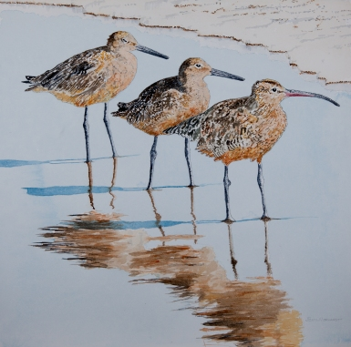 "2 Willets 1 Whimbrel. 23"" x 23"" watercolor,SOLD"