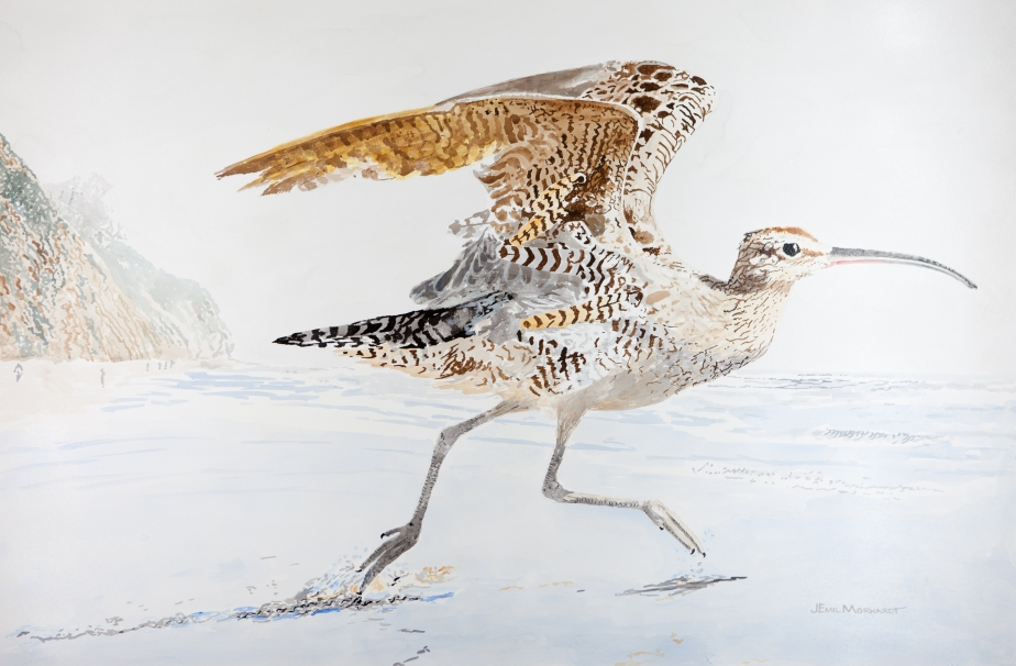 Whimbrel Taking Off Acrylic 24 x 36 PNT_0059