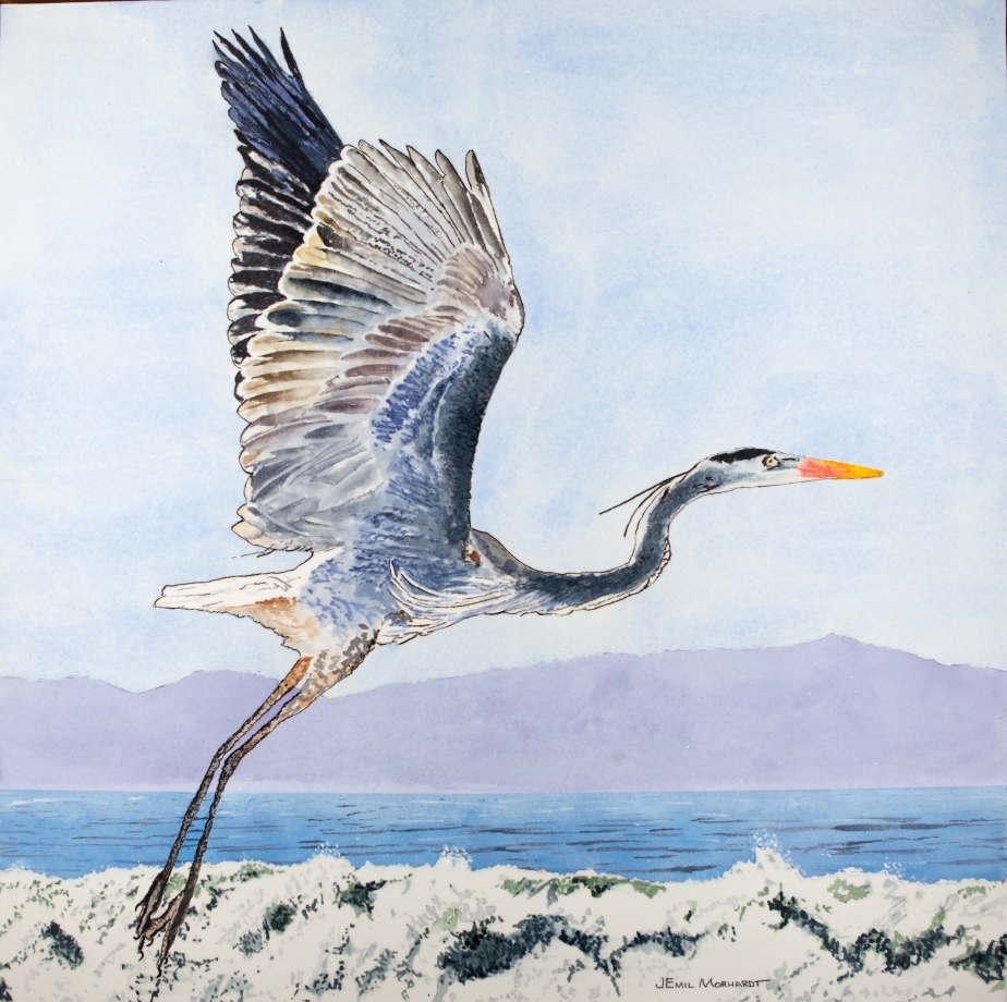 Heron, Great Blue #1 PNT_0070