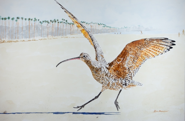 """Whimbrel Coming In, East Beach, Santa Barbara. Acrylic 24"""" x 36"""" on panel. $1,100 SOLD"""