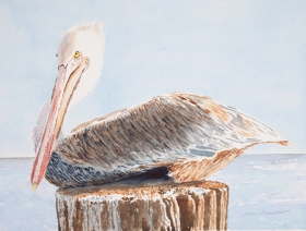 "Brown Pelican #1, 16"" x 20"" Watercolor, $500"