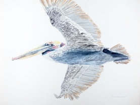 "Brown Pelican #3, 22"" x 22"", Acrylic, $1,000."