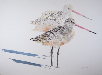 "Marbled Godwits #23, 22"" x 30"" Acrylic on panel, $1,000"