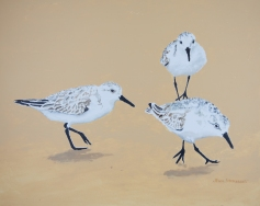"Sanderlings #10, Acrylic on panel, 16"" x 20"", $500"