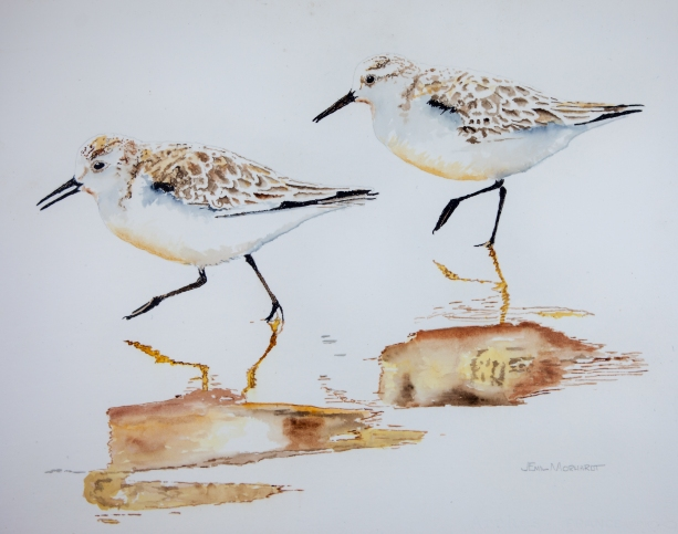 "Sanderlings #11, Acrylic on panel, 16"" x 20"", $500"