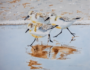 "Sanderlings #12, Acrylic on panel, 16"" x 20"", $500"