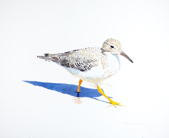 """Spotted Sandpiper #1, 16"""" x 20"""" Acrylic, $500"""