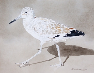 "Willet #7, 16"" x 20"" Watercolor, $500"