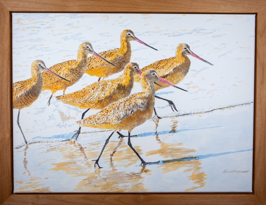 6 Marbled Godwits Framed IMG_0296