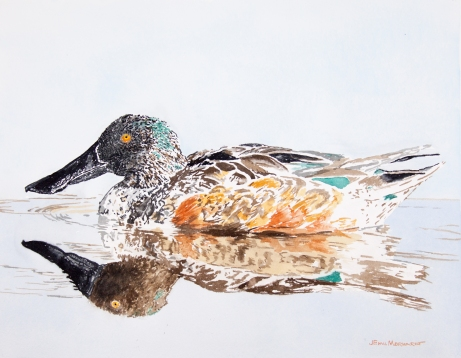 """Male northern shoveler. 16"""" x 20"""" watercolor on paper. $500"""