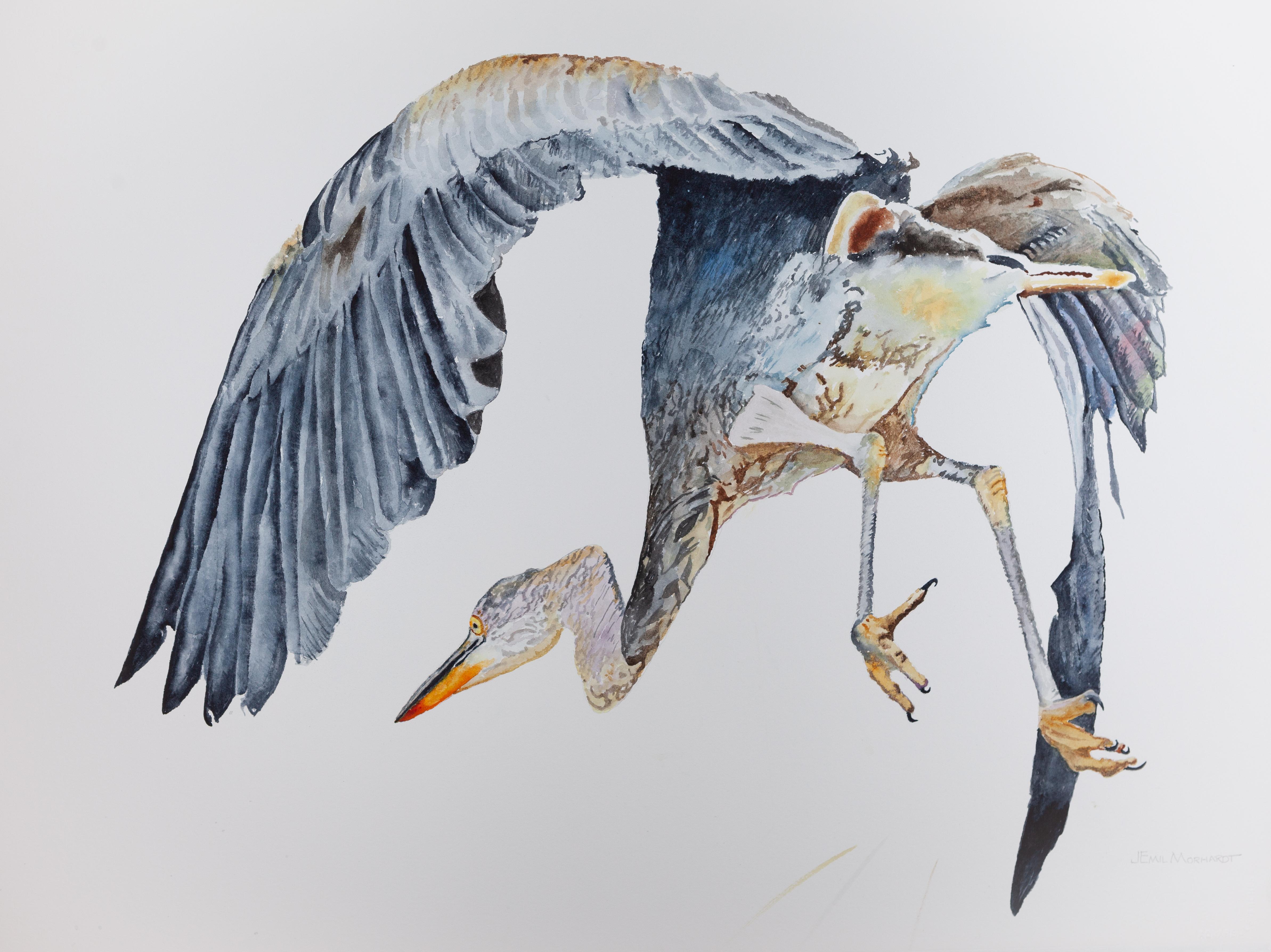 Heron, Great Blue #2 IMG_0344