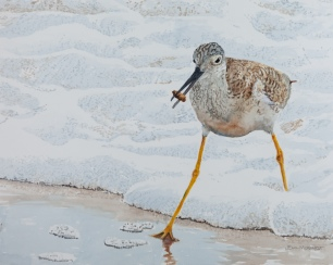 """Greater Yellowlegs #1, 16"""" x 20"""" Watercolor on panel, $600, HONORABLE MENTION AT MARITIME MUSEUM SHOW"""