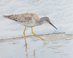 Greater Yellowlegs #2, acrylic on panel. $600