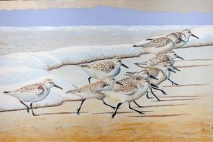 "Sanderlings #20, 24"" x 36"", Acrylic, $1,500"