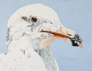 "Western Gull #5, Hendry's Beach, Santa Barbara 8"" x 10"" watercolor on Arches 140lb cold-pressed paper. Matted. $125"