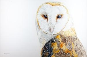 """Athena, the Barn Owl, Santa Barbara Museum of Natural History, 24"""" x 36"""" watercolor, $1,500 SOLD"""
