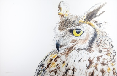 "Max, the Great Horned Owl, Santa Barbara Museum of Natural History 24"" x 30"" Watercolor, $1,100 SOLD"