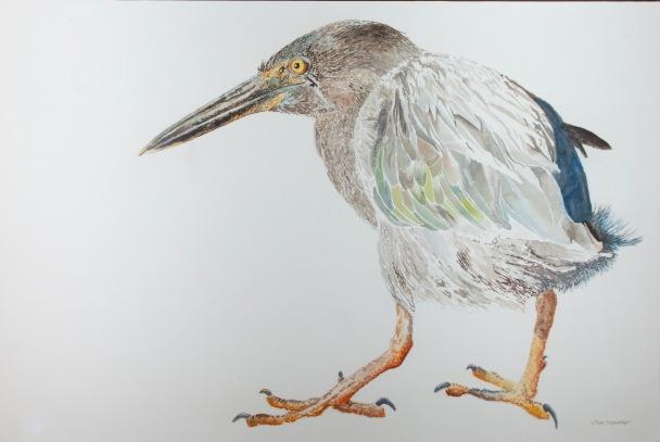 "Galapagos Heron. 23"" x 36"" mixed media on panel. $1,500"