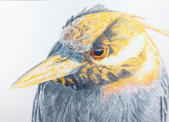 "Yellow-Crowned Night Heron. 22"" x 30"" Mixed Media on Panel, $1,000"
