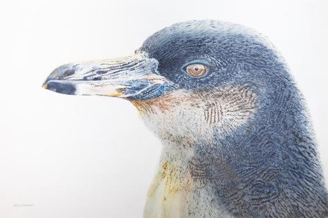 "Galapagos Penguin #2, 24"" x 36"" Mixed Media on Panel, $1,300"