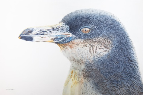 "Galapagos Penguin #2, 24"" x 36"" Mixed Media on Panel, $1,300"