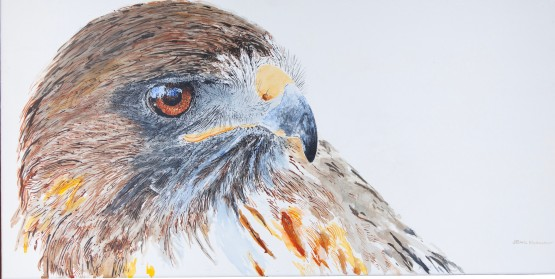 """Ivan, The Red-Tailed Hawk Cogitating, Santa Barbara Museum of Natural History. 15"""" x 30"""" acrylic on canvas. $975 at UGallery.com"""