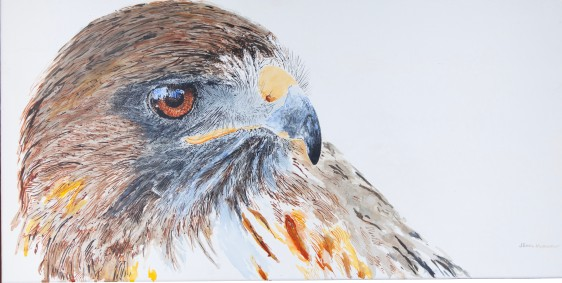 """Ivan, The Red-Tailed Hawk Cogitating, Santa Barbara Museum of Natural History. 15"""" x 30"""" acrylic on canvas. $975 at UGallery.com SOLD"""