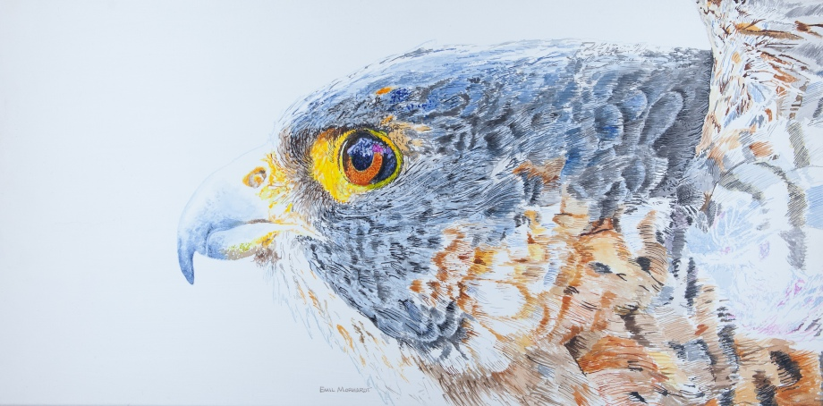 """Kisa the Peregrine, 15"""" x 30"""" Acrylic on canvas, $975 at UGallery.com"""
