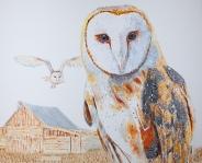 Athena, the Barn Owl #2.