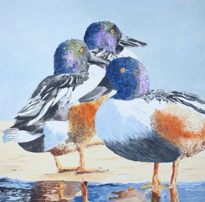"Northern Shovelers #3, 20"" x 20"" Acrylic on canvas, $495"