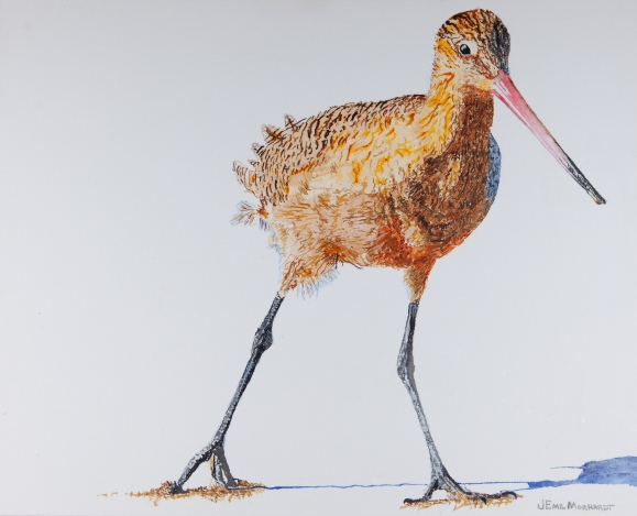 "Marbled Godwit # 24, 16"" x 20"" Acrylic on canvas, $350 SOLD"