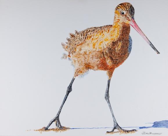 """Marbled Godwit # 24, 16"""" x 20"""" Acrylic on canvas, $350"""