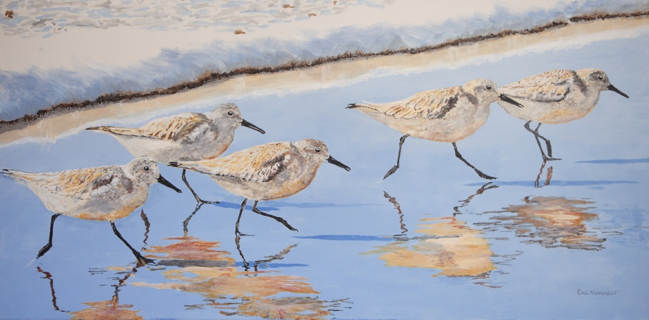 "Five Sanderlings 18"" x 36"" acrylic on canvas. $950. Just photographed on Leadbetter Beach."
