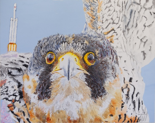 """Vandenberg Falcons 24""""x30 acrylic on canvas. When I painted this Peregrine falcon hadn't quite realied how intimidated he looked, so I thought it might be good to have something in the picture to intimidate him. What better than the SpaceX Falcon 9 Heavy I had just watched launched from Vandenberg AFB?"""
