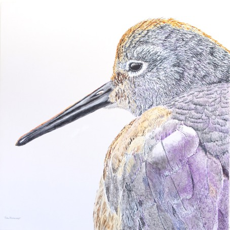 "Willet #10 ""Sleepy Willet"" 30"" x 30"" acrylic on canvas, $1,600 at UGallery.com"