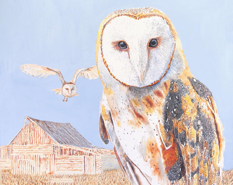 Athena the Barn Oswl #2 IMG_0657