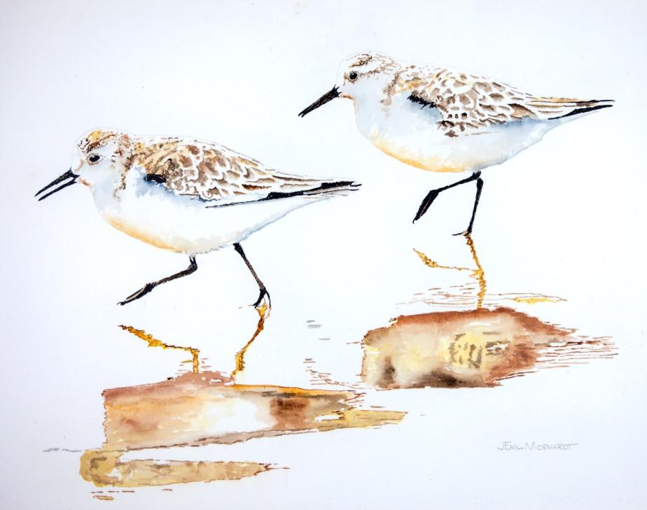 Sanderlings #11 PNT_0245